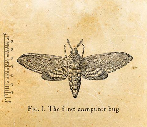 Moth-y
