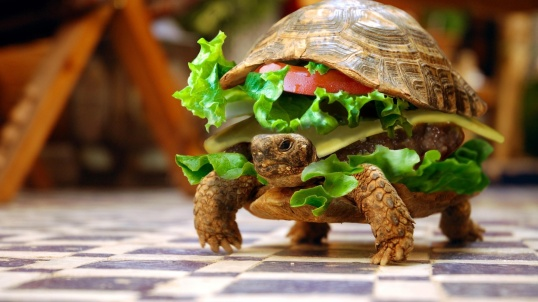 A-funny-photoshop-piture-of-a-turtle-burger-food-animal-hybrid