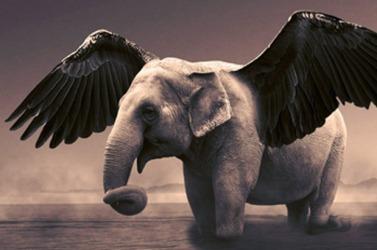 elephant-angel
