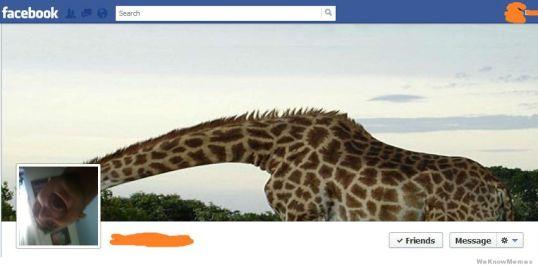 funny-facebook-cover-photo-giraffe