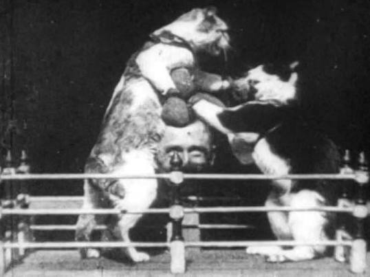 heres-the-first-cat-video-ever-thomas-edisons-the-boxing-cats-from-1894