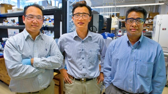"From left, Byung Yang Lee, Seung-Wuk Lee, and Ramamoorthy Ramesh developed the ""viral-electric"" generator. (Photos by Roy Kaltschmidt of Berkeley Lab)"